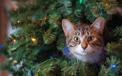 Kaip atrodo atspari katėms kalėdinė eglutė?