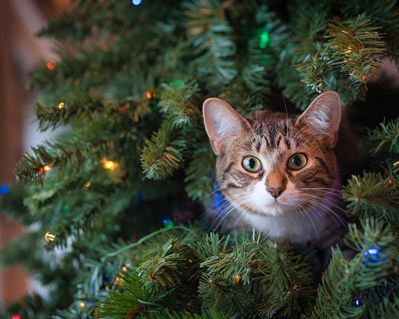 Katėms atspari kalėdinė eglė