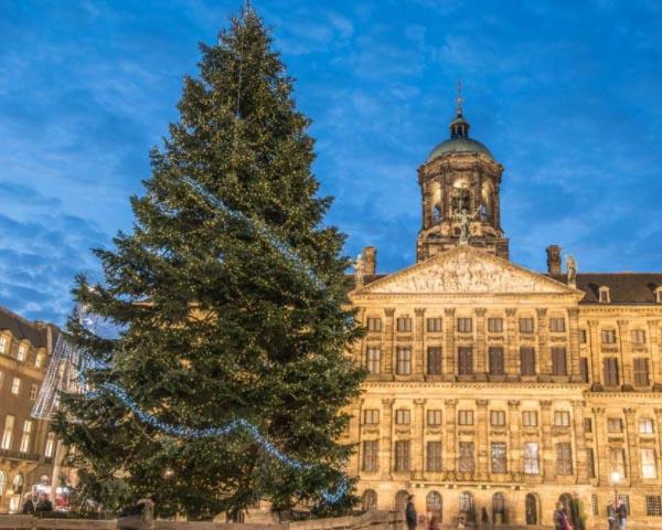 Amsterdamo kalėdų eglė